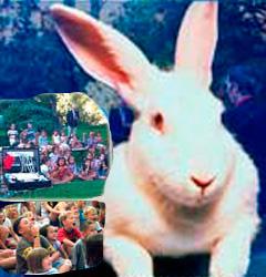 Conejo en fiestas infantiles